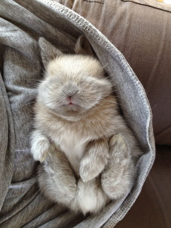cute picture of a bunny sleeping