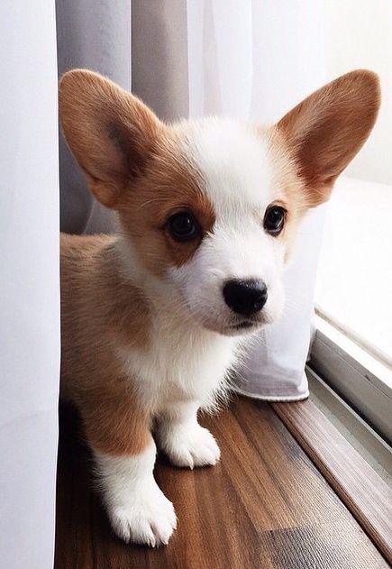 photo of a cute puppy blog