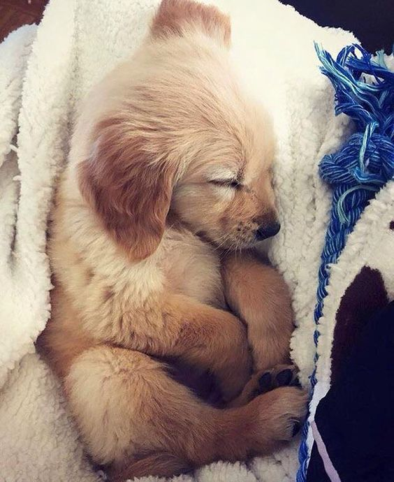 picture of a cute sleeping puppy