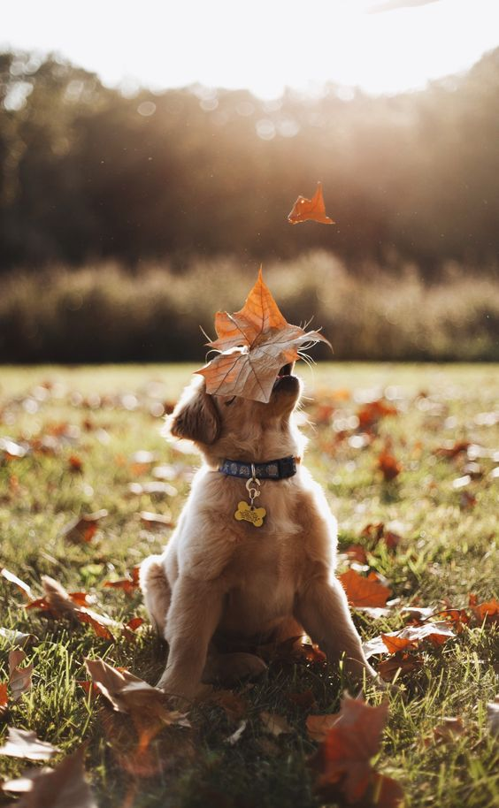 photos of a cute puppy in autumn