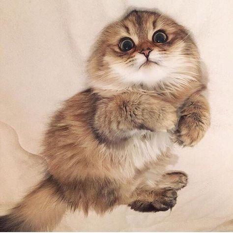 cat funny cute