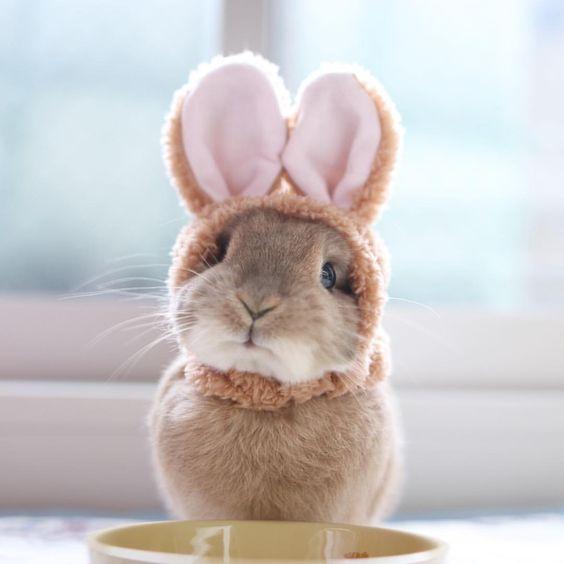 cute bunny baby