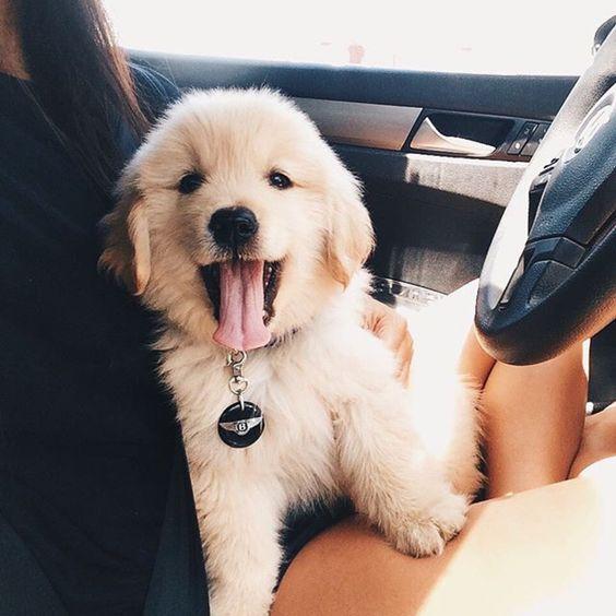 cute puppy happy