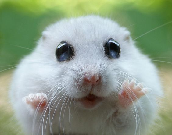 goodie mood animal cuteness