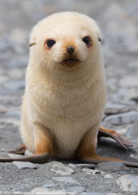 cute-animal-picture