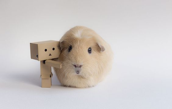 cute-hamster-scene
