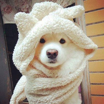 cute-poppy-with-towel