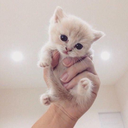 photo d'un bébé chaton minuscule et tres tres mignon