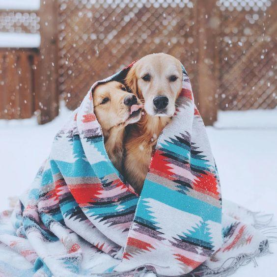 cute golden retrievers on Pinterest