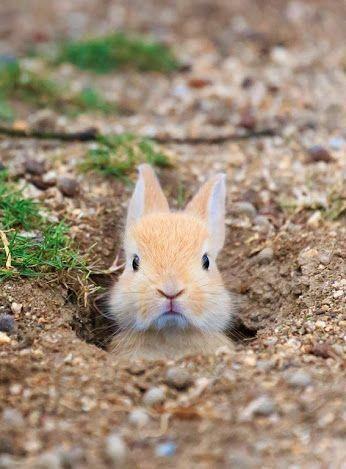 cute bunny on Pinterest