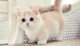 chat mignon sur pinterest