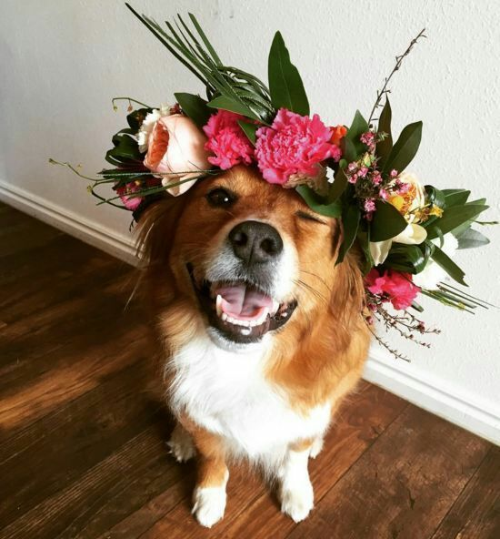 cute dog with flowers on its head - Pinterest