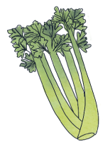 illustration celeri - goodiemood